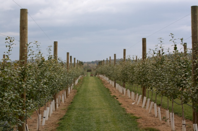 AppleOrchard7Monthsedited 5187